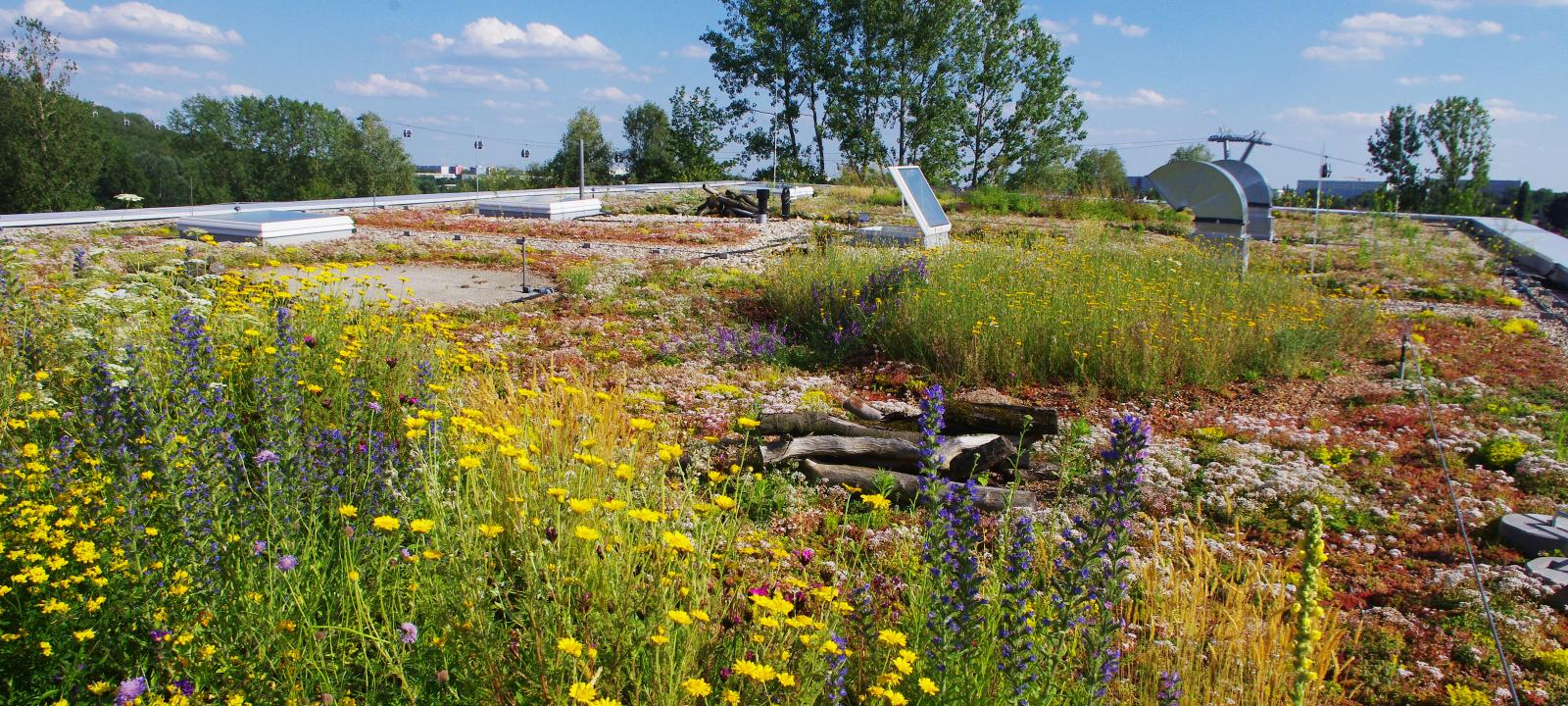 Green roof with meadow flowers, herbs and Sedum